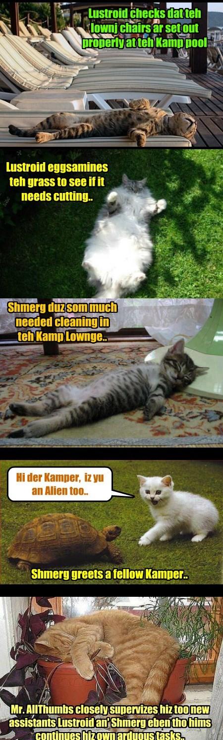 Kamp 2015: After teh crash ob teh Alien Flying Sawser, teh Aliens Lustroid an' Shmerg wer assined as assistants to maintenance kittie Mr. AllThumbs.. and dey iz doing kwite well at der new tasks..