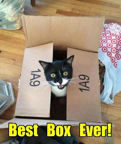Best   Box   Ever!