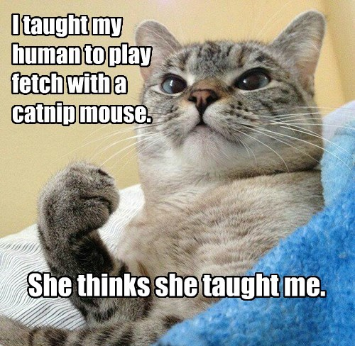 Success Cat: educator.