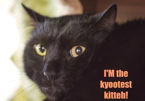I'M the kyootest kitteh!