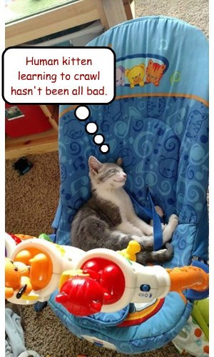 Human kitten learning to crawl hasn't been all bad