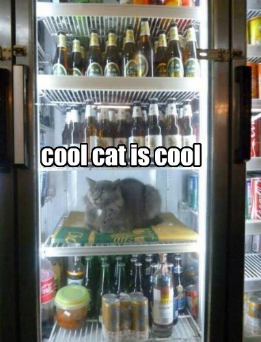 cool cat is cool