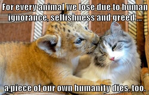 For every animal we lose due to human ignorance, selfishness and greed ...  a piece of our own humanity dies, too.