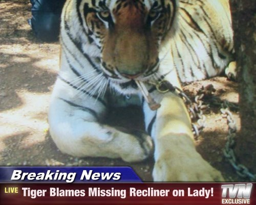 Breaking News - Tiger Blames Missing Recliner on Lady!