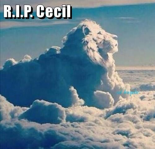 R.I.P. Cecil