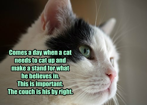 Comes a day when a cat needs to cat up and  make a stand for what  he believes in. This is important. The couch is his by right.
