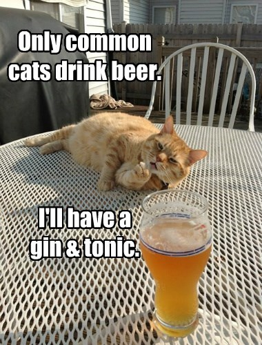 Only common cats drink beer.     I'll have a  gin & tonic.