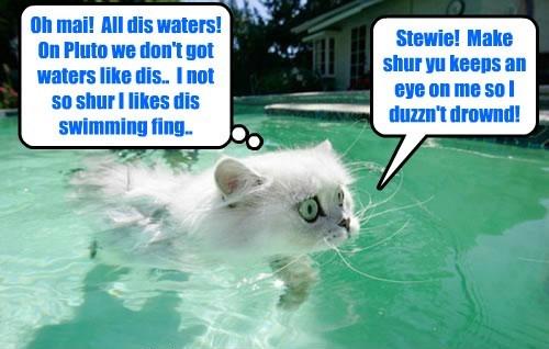 Kamp 2105: Alien Shmerg tries teh Kamp pool for teh first time an' has sekond thawts abowt teh swimming aktibity..