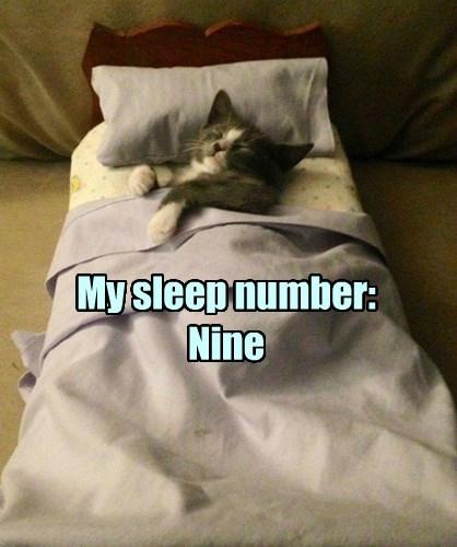 So many lives, never enough naps.