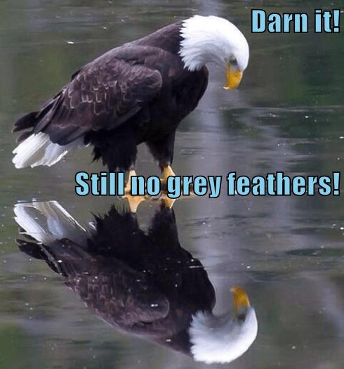Darn it! Still no grey feathers!