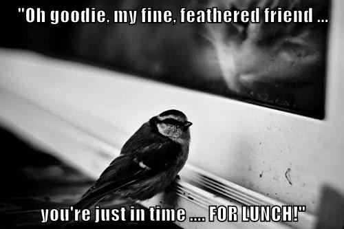 """""""Oh goodie, my fine, feathered friend ...  you're just in time .... FOR LUNCH!"""""""