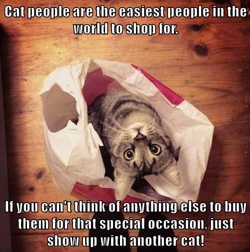 Cat people are the easiest people in the world to shop for.  If you can't think of anything else to buy them for that special occasion, just show up with another cat!