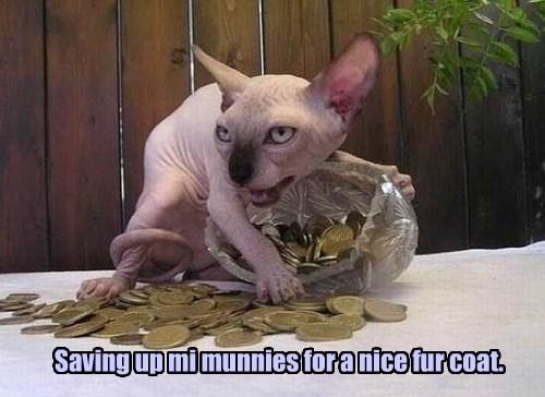 Saving up mi munnies for a nice fur coat.