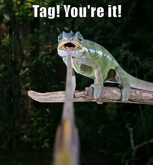 captions,chameleon,funny