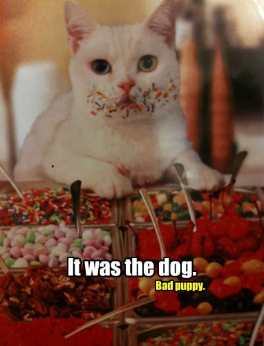 It was the dog.