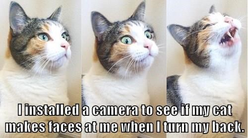 I installed a camera to see if my cat makes faces at me when I turn my back.