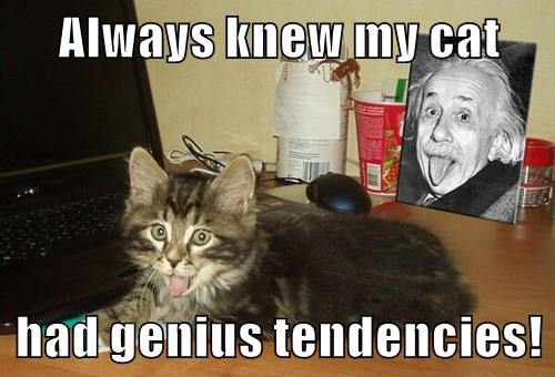 Always knew my cat   had genius tendencies!