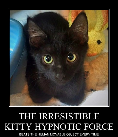 THE IRRESISTIBLE KITTY HYPNOTIC FORCE