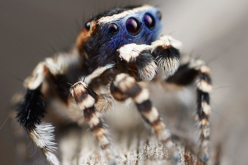 The cutest spider has been found, we can all rest now.