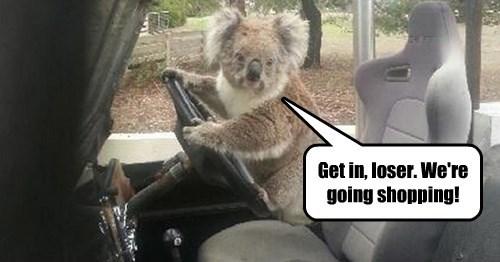 Mean Koalas