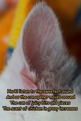 Hark, The Can Opener Sings