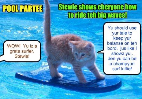 Kamp 2015: Der iz grate fun at teh Pool Partee when Stewie Bellbottoms demonstrates to teh Kamper kitties how to ride a surf bord eben wiff teh biggest waves!