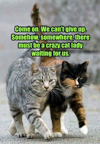 Come on. We can't give up. Somehow, somewhere, there must be a crazy cat lady waiting for us.