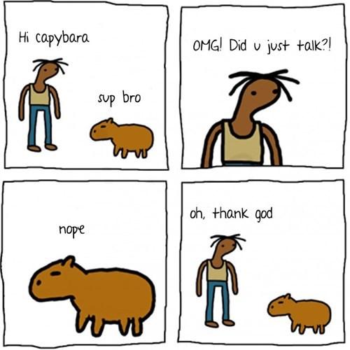 Oh Hey It's a Capybara