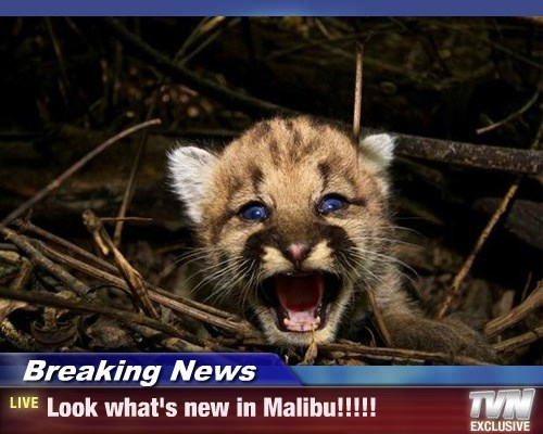 Breaking News - Look what's new in Malibu!!!!!