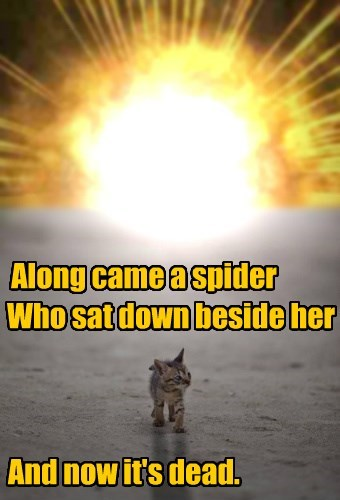 A warning to all spiders!