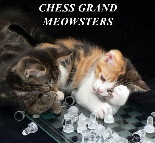CHESS GRAND MEOWSTERS