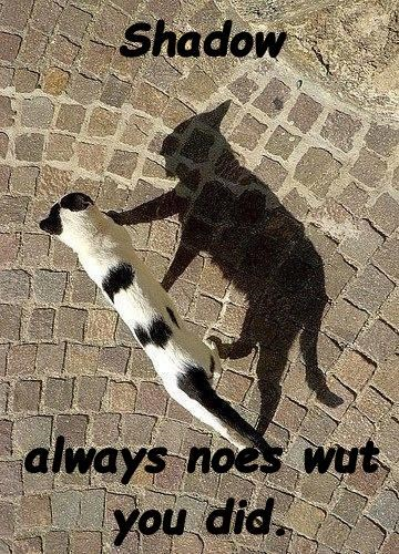 Shadow  always noes wut you did.