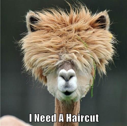 I Need A Haircut