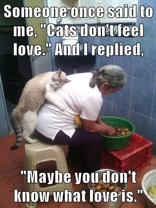 """Someone once said to me, """"Cats don't feel love."""" And I replied,  """"Maybe you don't know what love is."""""""