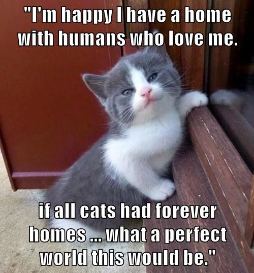 """""""I'm happy I have a home with humans who love me.  if all cats had forever homes ... what a perfect world this would be."""""""
