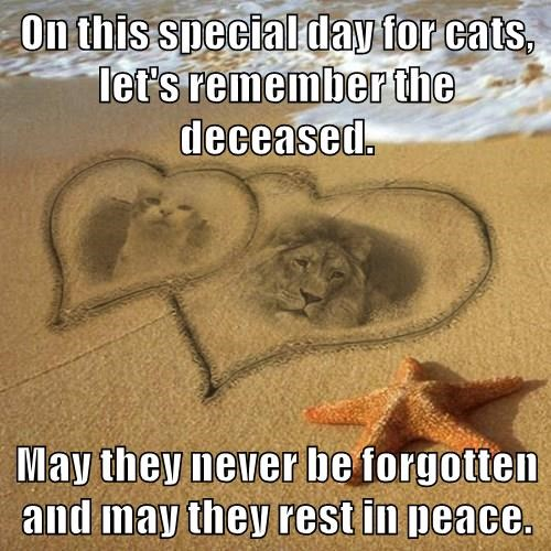 On this special day for cats, let's remember the deceased.  May they never be forgotten and may they rest in peace.