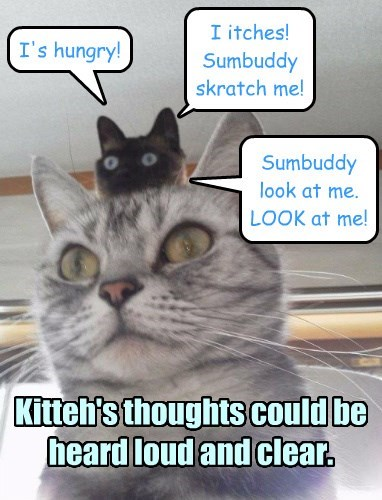 Reading kitteh's thoughts!