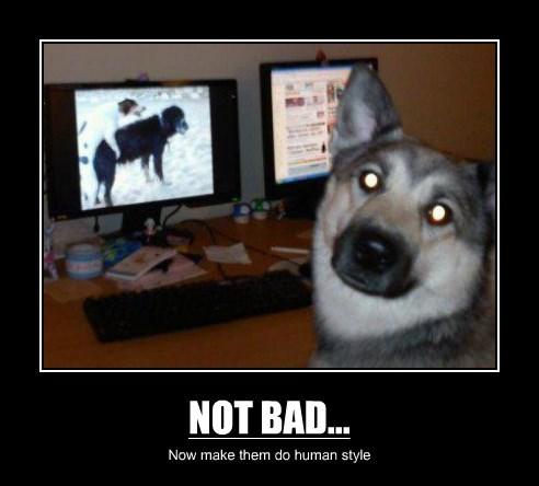 NOT BAD...