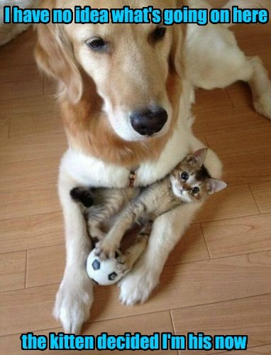 That's how cat's operate (even the small ones)