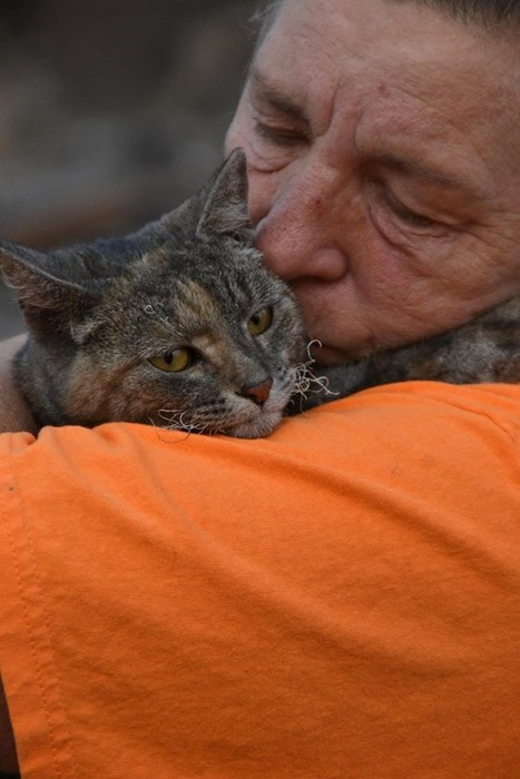 cute cats image A Cat Survived a Devastating Fire With Only Singed Whisker or Two