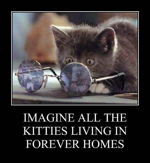 IMAGINE ALL THE KITTIES LIVING IN FOREVER HOMES
