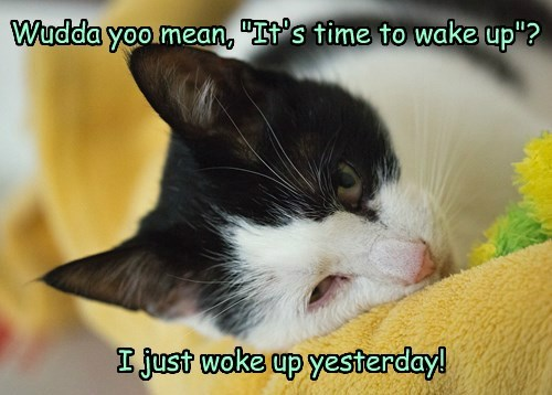 """Wudda yoo mean, """"It's time to wake up""""?"""