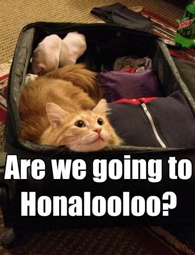 Hawaiian Cat Floo