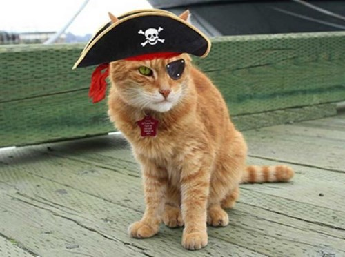 cute cats news This Beloved Old Sailor is Getting a Big Retirement Party