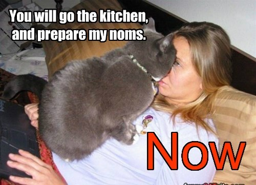 You will go the kitchen, and prepare my noms.