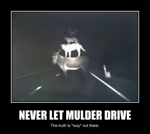 NEVER LET MULDER DRIVE