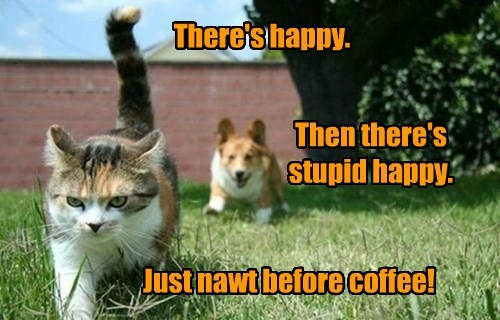 dogs,coffee,caption,Cats,funny