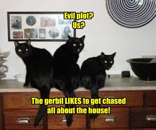 Evil plot? Us?        The gerbil LIKES to get chased all about the house!