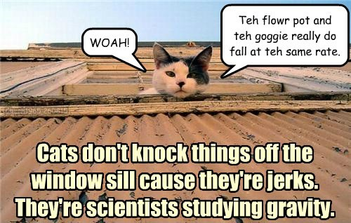 Gravity,science,caption,Cats,funny
