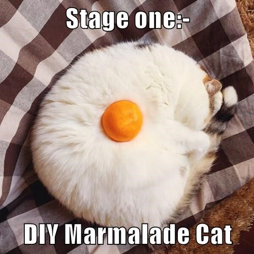 Stage one:-  DIY Marmalade Cat